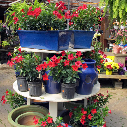 Landscaping Rochester Indoors Plants Seasonal Plant